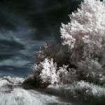 infrared_photography_1